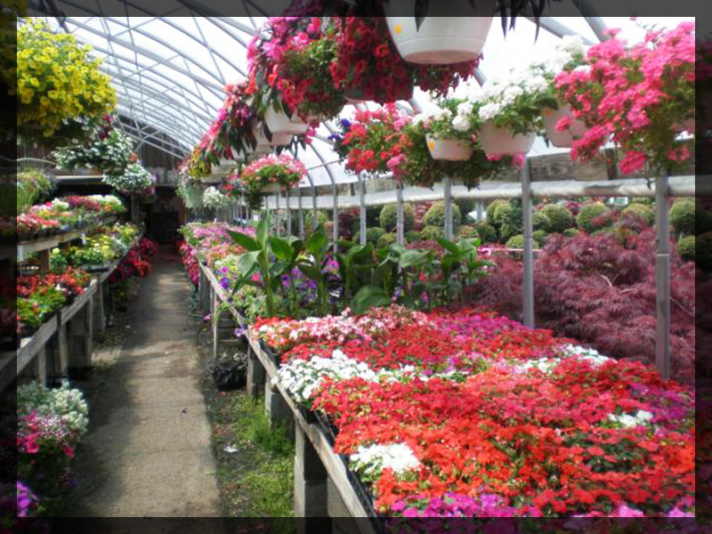 garden center eldersburg maryland