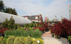 Dicks Garden Center Eldersburg MD Landscaping Contractor